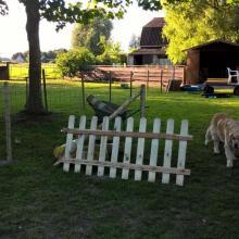 Klusjesdag in hondenschool KV 't Houtland